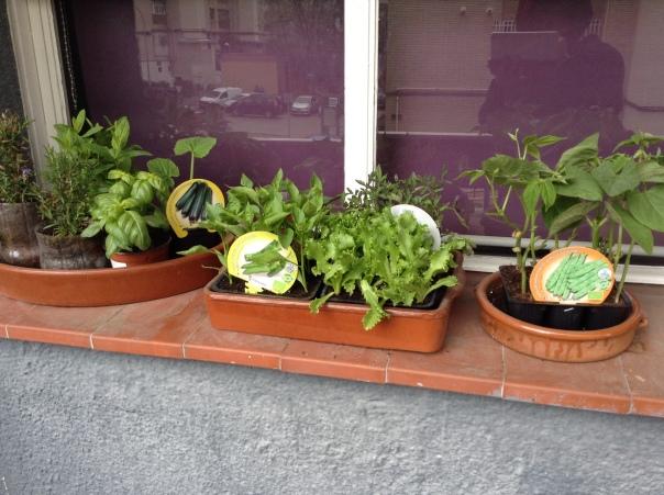 Mis plantitas. Abril 2018.