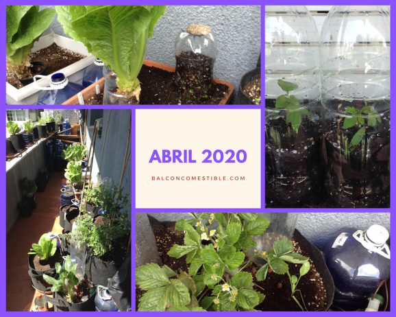 BALCON COMESTIBLE ABRIL 2020