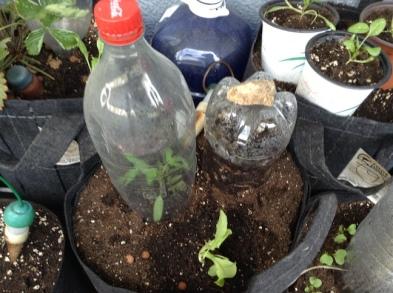 En sitio definitvo, junto a una botella compostadora.